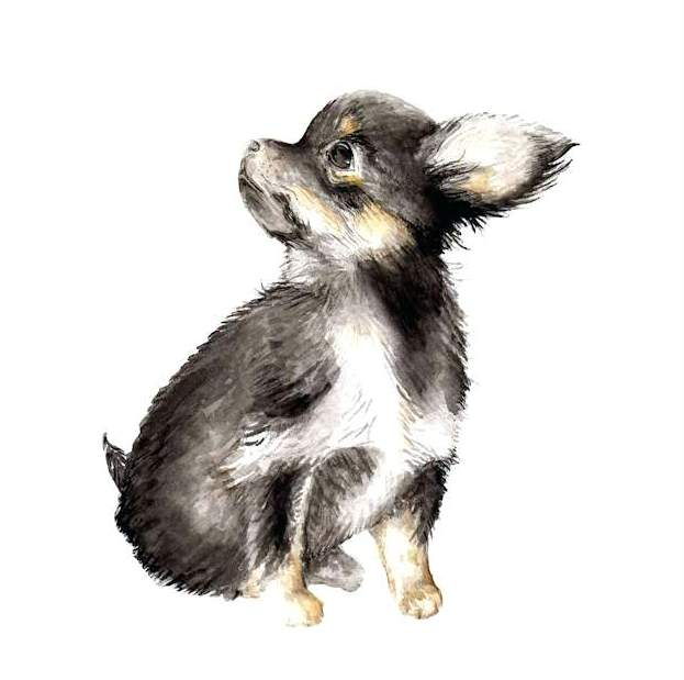 long-haired-chihuahua-by-wandering-1-piece-art-print-canvas-watercolor